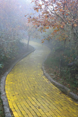 Yellow brick road winding through the forest at Beech Mountain, North Carolina  Stok Fotoğraf