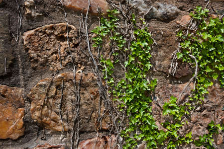 Ivy on rough stone wall textured background Stock Photo