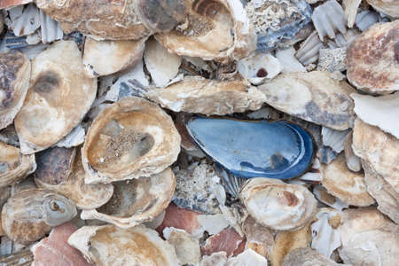 Pile of colorful shells at Wellfleet, Massachusetts on Cape Cod