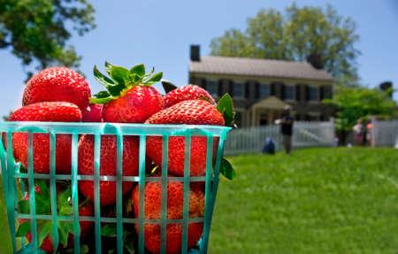 Basket of strawberries in front of Mount Bleak House in Virginia