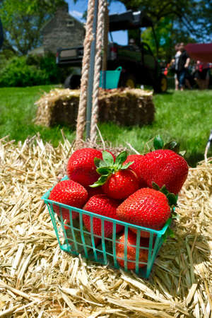 Basket of strawberries on hay bale photo