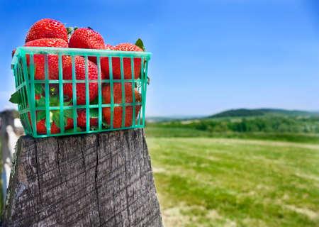 フェンスの上のイチゴのバスケット 写真素材