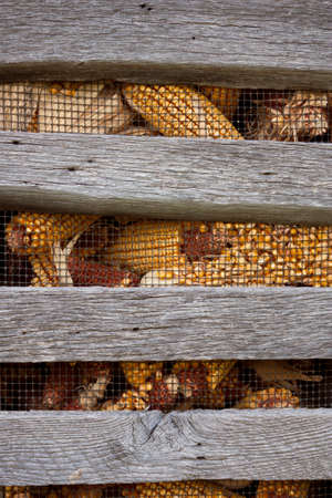 Close-up of corn crib with corn behind wire  Stock Photo