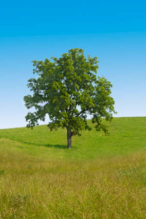 Big tree in the middle of green field against blue sky Stock Photo