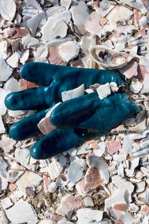 Rubber glove in pile of shells in Wellfleet, Massachusetts on Cape Cod Zdjęcie Seryjne