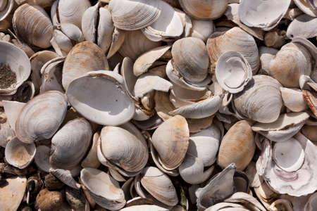 Pile of clam shells in Wellfleet, Massachusetts on Cape Cod