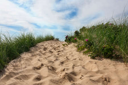 Path to beach in Wellfleet, Massachusetts on Cape Cod with blue sky and beach grass