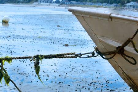 Boat tied in harbor