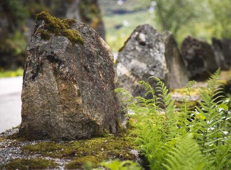 textured wall: Fern growing near stone trolls in Norway.