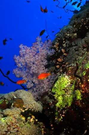 oceana: Coral reef