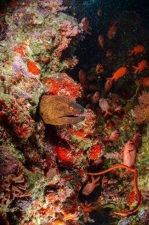 plancton: Moray anguila Con Soldierfish y un montón de plancton Foto de archivo