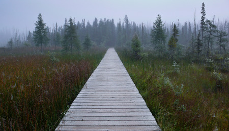 Wooden path through a swampy areawith lots of vegetation around photo