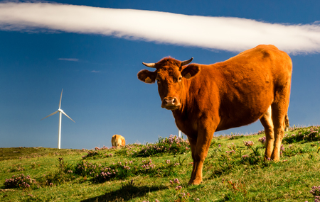 perfectly: Perfectly integrated: livestock and wind energy