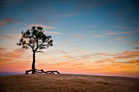 nowhere: Photography representing a lonely tree in the middle of nowhere