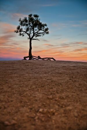 inhospitable: Photography representing a lonely tree in the middle of nowhere
