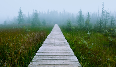 swampy: Wooden path, through a swampy area,with lots of vegetation around