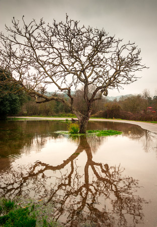 recent: Reflection of a tree over a puddle formed by the recent rain