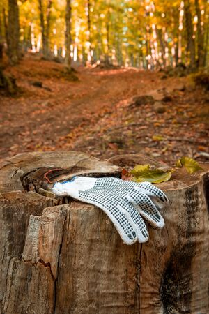 Glove lost in the woods, and left in a trunk for easy location