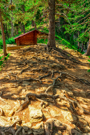Amazing textures that generate the roots of trees when they leave the ground