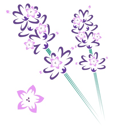 lavender flower: Lavender stem & flowers Illustration