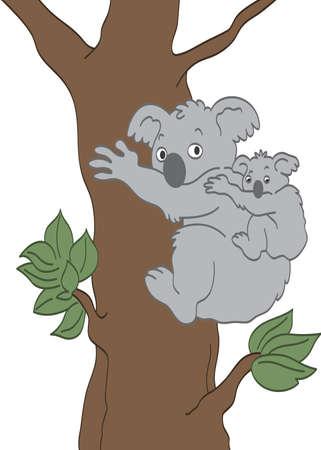 코알라 곰