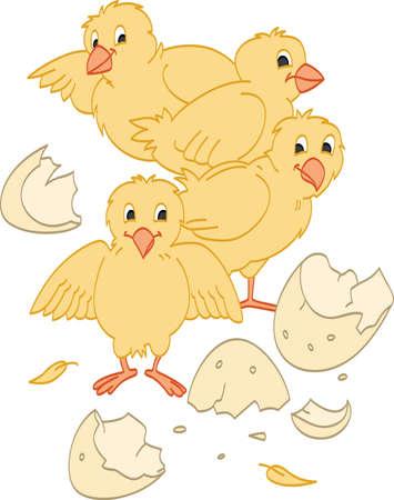Hatched Chicks Vettoriali