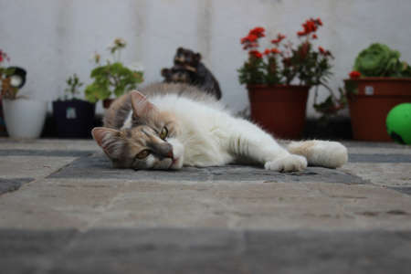 Cat lying on the floor looking at the camera