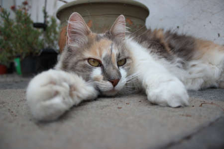 Cat lying on the ground close-up Foto de archivo