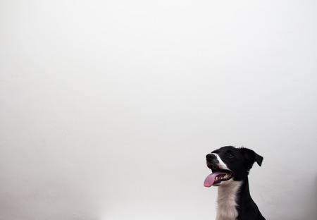 dog on white wall photo