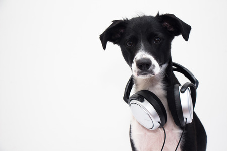 DJ Dog photo