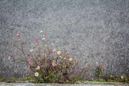 overleven bloemen op de muur Stockfoto
