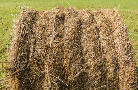 recently: freshly wheel shaped haystack recently harvested in a grass field Stock Photo