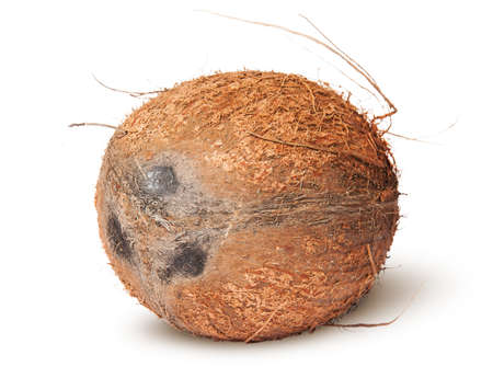 copra: Closeup of coconut rotated isolated on white background