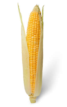 purified: Purified ear of corn with leaves isolated on white background