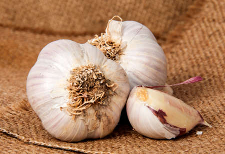 two heads: Closeup of two heads of garlic and garlic clove on sackcloth