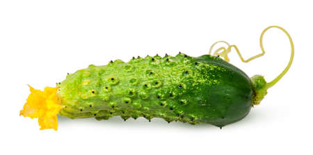 flipped: Juicy green cucumber with stem flipped isolated on white background Stock Photo