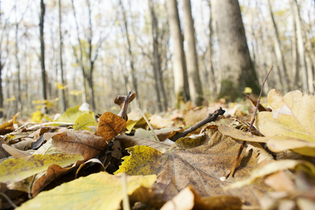 Fallen Leafs and Trees, Fall Background, Autumn