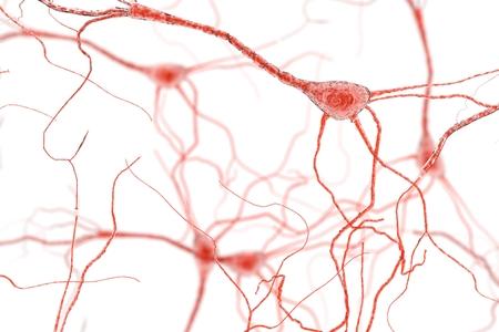 Neuron Cell, Neurons on white background, single neuron cell in human brain 3d rendering Foto de archivo