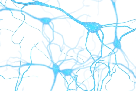 Neuron Cell, Neurons on white background, single neuron cell in human brain 3d rendering Stockfoto