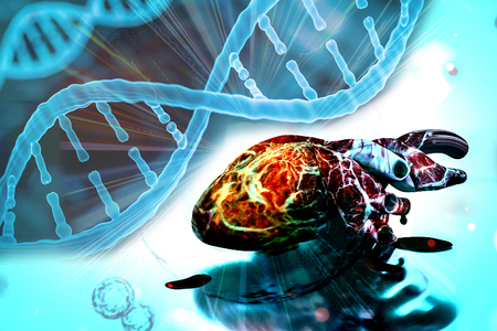 human heart and DNA concept heart disease and health treatments 3d rendering