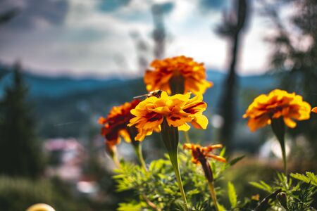 Beautiful colorful summer flowers with mountain background travel and vacation concept emotional background joy and creativity concept