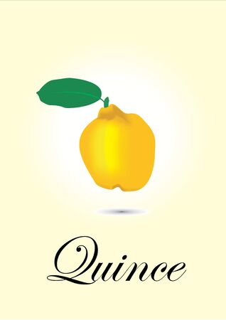 quince: Quince chart vector illustration Illustration