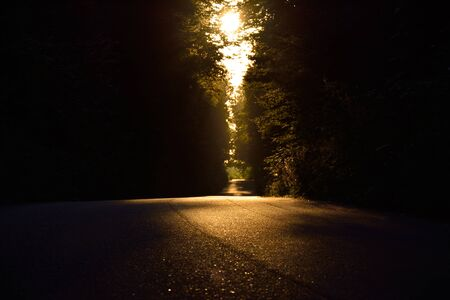 dubious: Side road through dense forest , barely lit by the sun. Stock Photo