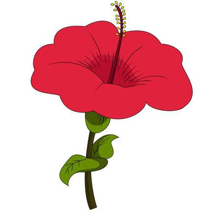 Belle fleur d'hibiscus rouge. Illustration vectorielle Vecteurs