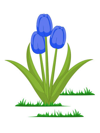 Isolated tulips flowers vector