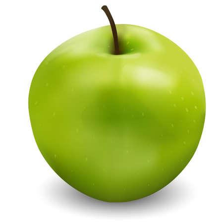 Illustration of realistic green Apple
