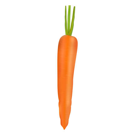 Illustration of ripe fresh realistic carrot Illustration