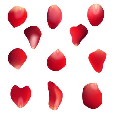Red rose petals set, isolated on white, vector illustration Illustration