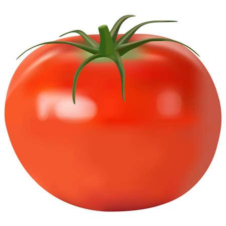 Pomodoro realistico. illustrazione vettoriale