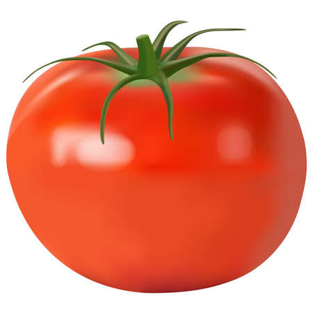 Tomato realistic. vector illustration